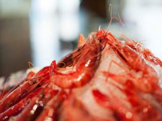 Gamba roja en el Restaurante Nou Manolín de Alicante